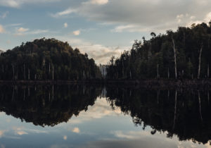 Below the Surface of Tasmania's Lake Pieman