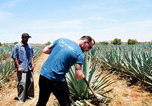 Tales from the Agave Fields