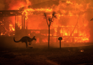 Finding Our Way in The Wake of the Bushfires